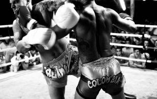 img_0603-bbq-fights-tiger