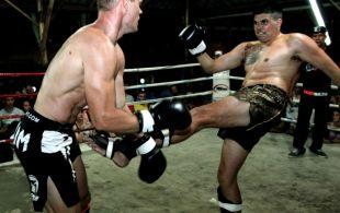 img_0752-bbq-fights-tiger