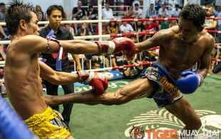 Tiger Muay Thai fighter Phetdam fights at Bangla boxing stadium in Phuket, Thailand, Friday, Aug. 2, 2013. (Photo by Mitch Viquez ©2013)