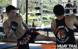 Tiger Muay Thai and MMA training camp, Phuket, Thailand guest photos: July 2011