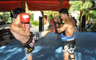 Tiger Muay Thai and MMA training camp guests: November 2011