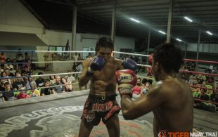 tiger1-3-14-143
