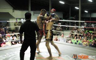 tiger1-3-14-35