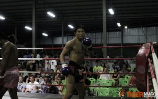 tiger1-3-14-94